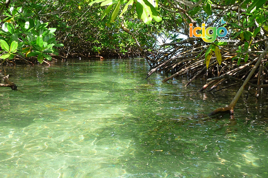 Click to enlarge image decouverte-mangrove.jpg