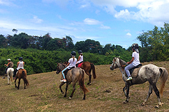 Randonnée équestre et baignade chevaux