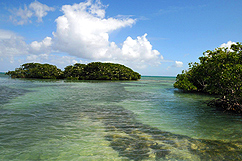 Mangrove - Ile aux oiseaux
