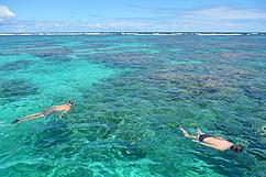 Snorkeling sur la barrière de corail du grand cul-de-sac marin